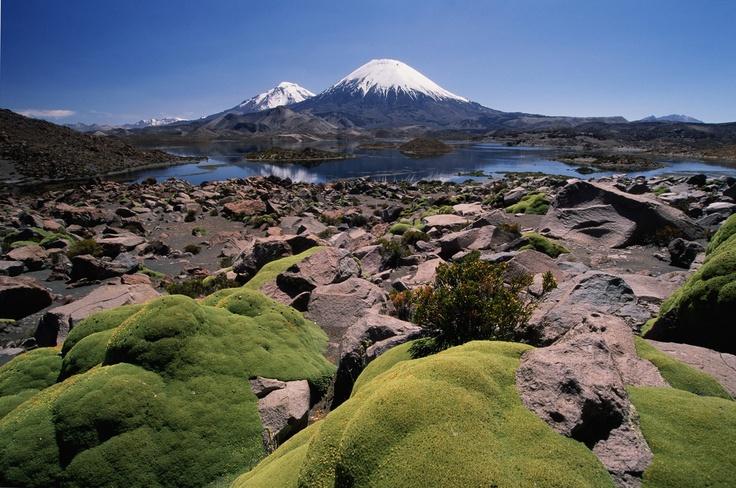 Putre, Chile. Las plantas verde de abajo son llaretas. Parecen alfombras de pasto, pero son muy duras y maderosas. Crecen alto en las montañas, donde hace mucho frio. Las usan para hacer fuego, pero como crecen muy lentamente, se están extinguiendo. Chile Flora.