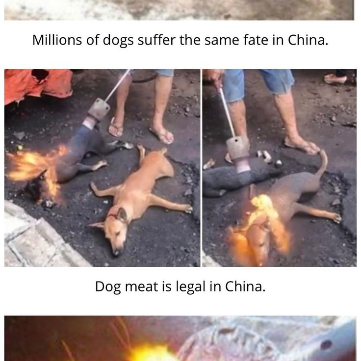"549 Beğenme, 165 Yorum - Instagram'da Natasha Galkina 🦋 (@natashagalkina): ""Yes. That's how Chinese celebrate Yulin Festival - By torturing thousands (10,000-50,000 each year)…"""
