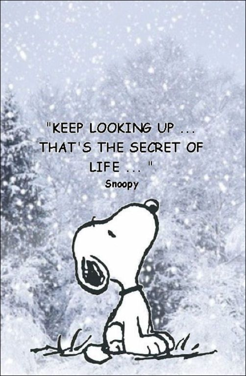 Keep Looking Up - That's The Secret of Life - Words To Live By - From Amazing Singles - the Hottest Singles Resource on the Web… visit www.amazingsingles.com