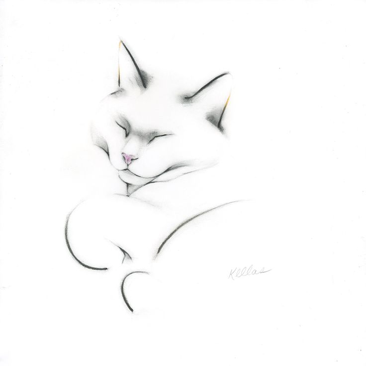Minimalist and elegant drawings of cats and birds by artist, Kellas Campbell.