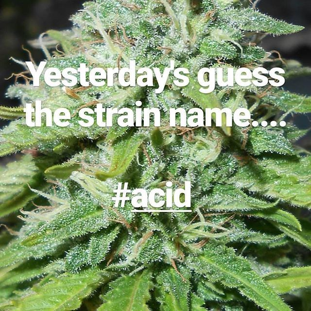🔉🔉 Guess the strain game 🔉🔉 #Acid #FinestSeedCollection #paradiseseeds