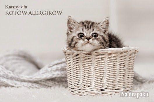 Karmy dla kotów alergików
