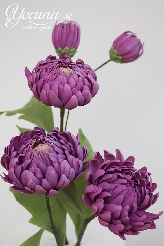 Los crisantemos (Chrysanthemum), son un género de alrededor de 30 especies diferentes. En algunos países de Europa y Japón es una planta ornamental muy popular y cultivada. En España el crisantemo está muy asociado a la festividad del Día de Todos...