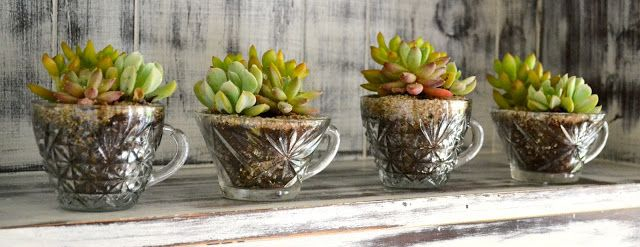 The Domestic Doozie: Teacup #Succulent Gifts