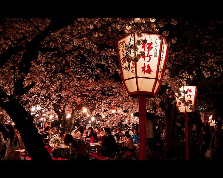 hanami in Maruyama Park, Kyoto