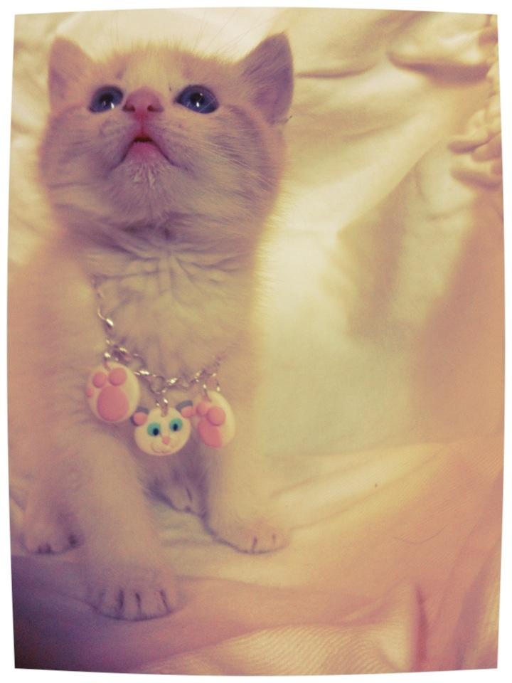 My model :)