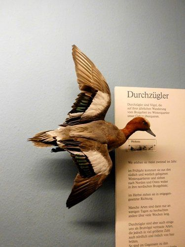 Museum für Naturkunde, Berlin, Germany