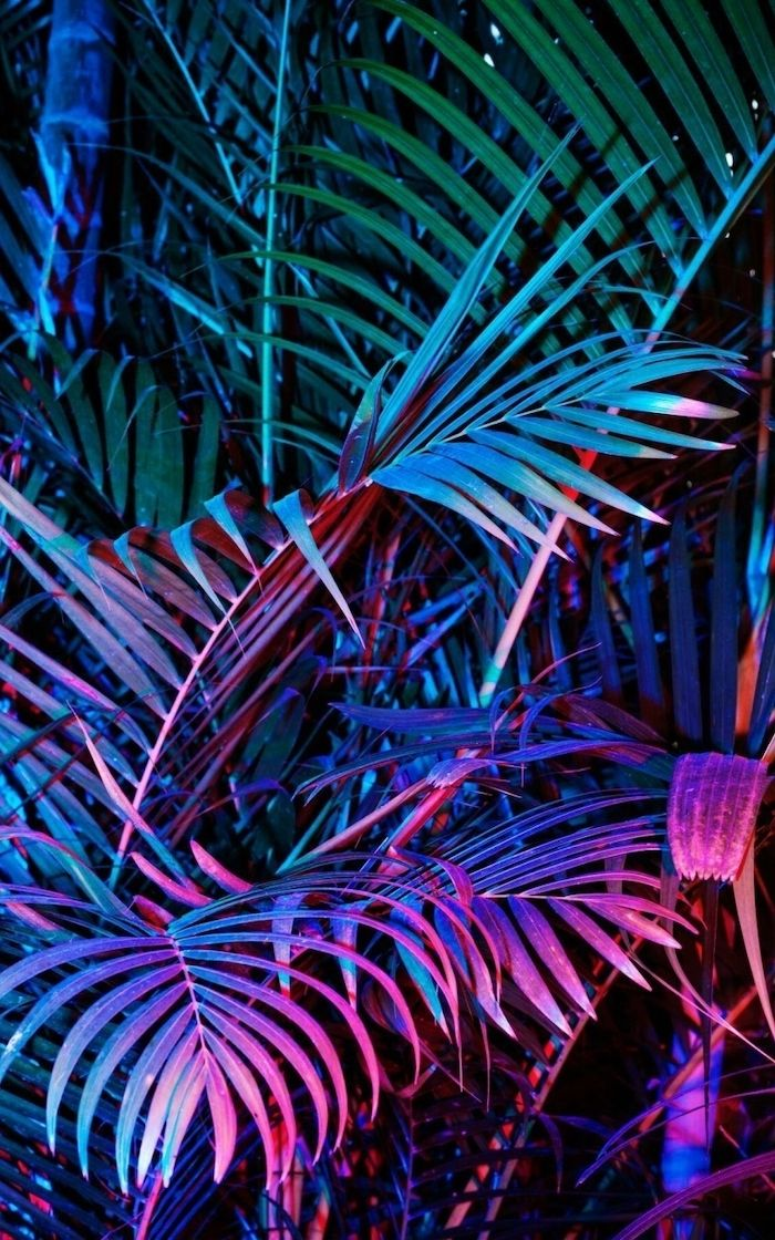 Aesthetic Phone Backgrounds Photograph Of Palm Leaves Illuminated In Different Lights Green Pink Purple In 2020 Neon Wallpaper Aesthetic Wallpapers Object Photography