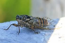 Cicada- this is terrible insect in Croatia. This insect make a irritating sound. But this is only drawback in Croatia.
