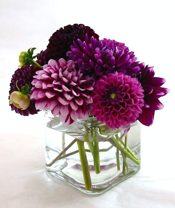 Purple Dahlia Mix