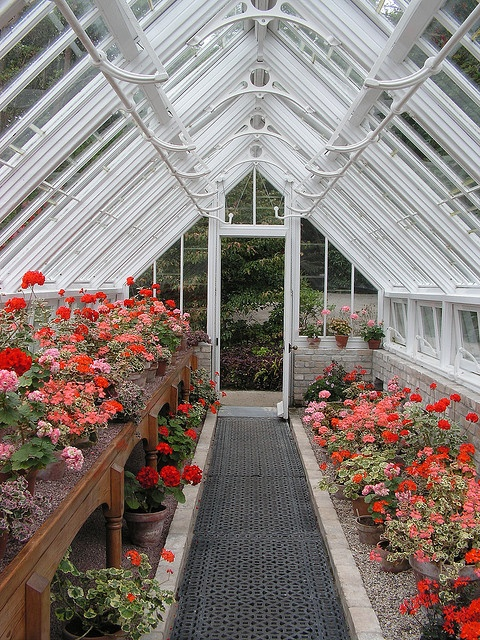 25 best ideas about victorian greenhouses on pinterest for Garden shed victoria