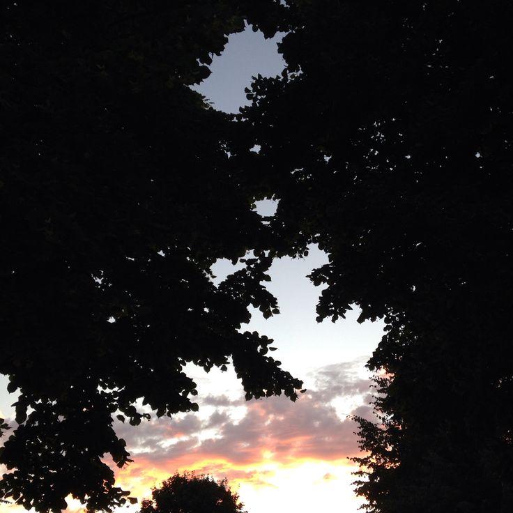 Looking sky in park dinner at wooden Vallila Helsinki