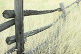 Wyoming State Grass: Western Wheat Grass