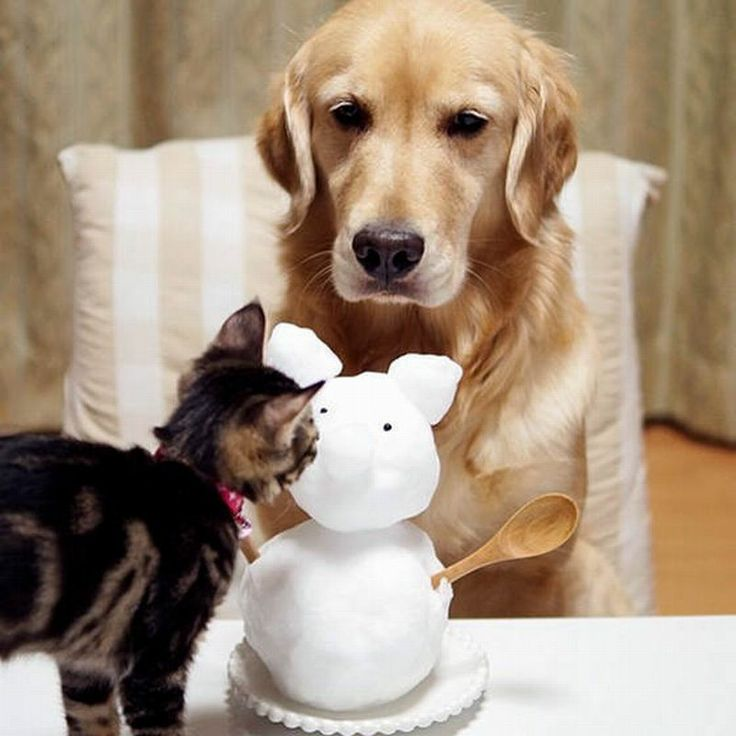 Top 20+ Beautiful Amazing Friendship Dog and Cat Wallpapers