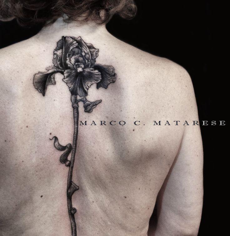Flower, fiore, iris. | Tattoo - etching, engraving, linework. | Tattooist: Marco C. Matarese, Milan. #marcocmatarese #matarese #incisione #etching #engraving #drawing #penandink #lines #steampunk #blackwork #milano #milan #sculptoroflines #tatuage #ink #tattoo #tattooist #dotwork #nero #tatuatore #linework #blackart #acquaforte #incisione