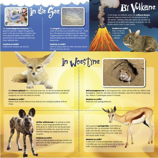 Afrikaanse taakhulp: Vurige diere. Tongvis. Borselwurm. Vulkaan-konyn. Fennec-jakkals. Ord se Kangaroe-rot. Wildehonde. Springbokke. Diere. Animals. Hoezit!