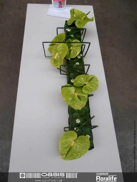 Modern, low table arrangement.with light green anthurium and green mums - Oasis Floralife