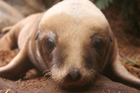 Image result for endangered nz animals