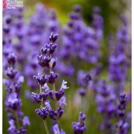zachos pharmacy - French Lavender