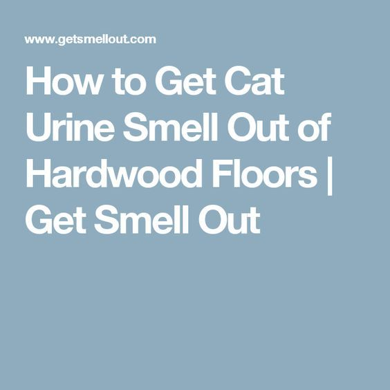How to Get Cat Urine Smell Out of Hardwood Floors | Get Smell Out