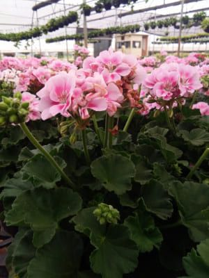 Choose The Best Flowers And Plants From Our Online Garden Center We Offer A Variety Of Fresh Nursery