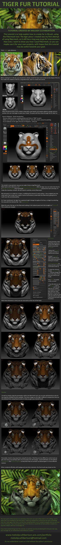 Zbrush Fur Tutorial by RedVanda on DeviantArt