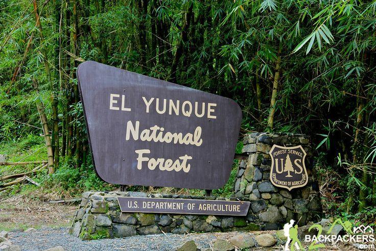el yunque | El Yunque National Forest, Sierra de Luquillo Trail in Puerto Rico See you soon too :)