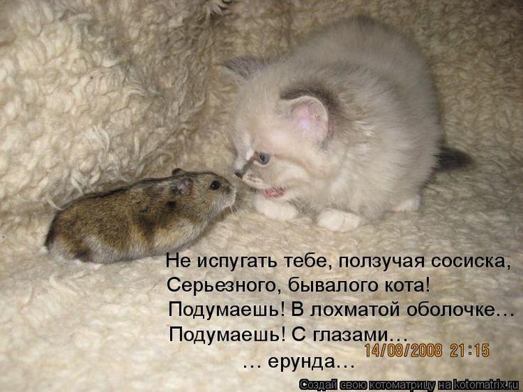 Котики с надписями смешными про мышек до слез, открытки сказок