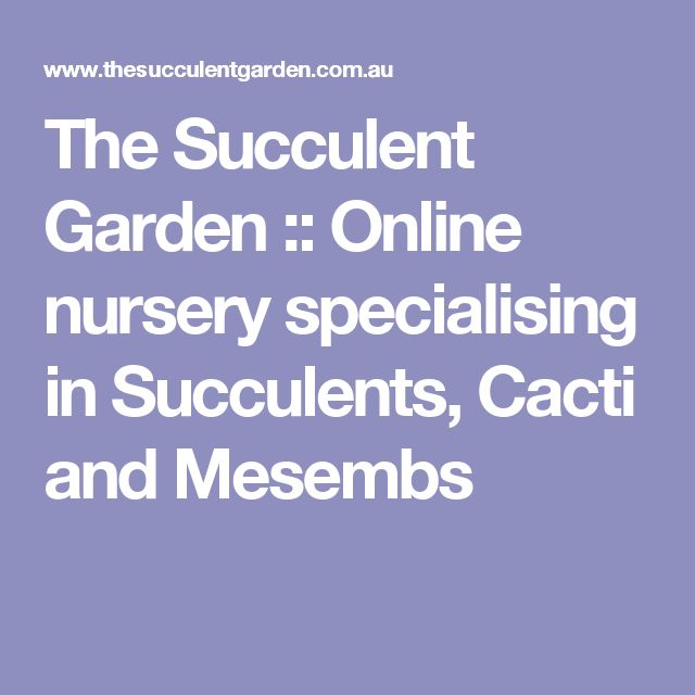 The Succulent Garden :: Online nursery specialising in Succulents, Cacti and Mesembs