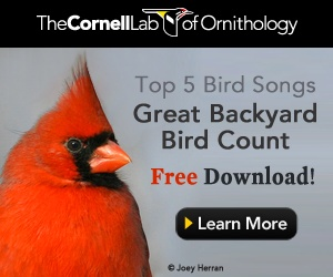 California Condor, Life History, All About Birds - Cornell ...
