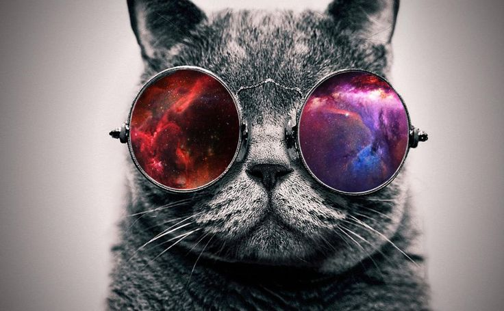 Sunglasses  memes HD Wallpaper