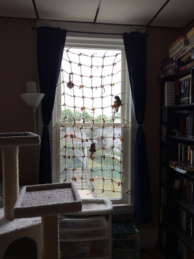 A great way to protect flighted parrots from windows!