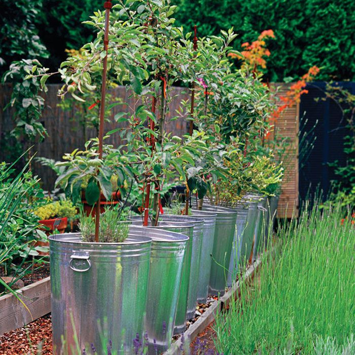 17 best images about container garden on pinterest gardens container gardening and vegetables - Galvanized containers for gardening ...