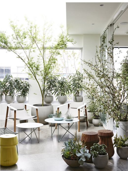 Gorgeous display at the Jardan showroom in Richmond of our Pedra Stone Pots. Beautiful display of plants created by Glasshaus Nursery, Richmond.  As featured on The Design Files> photo - Eve Wilson for The Design Files