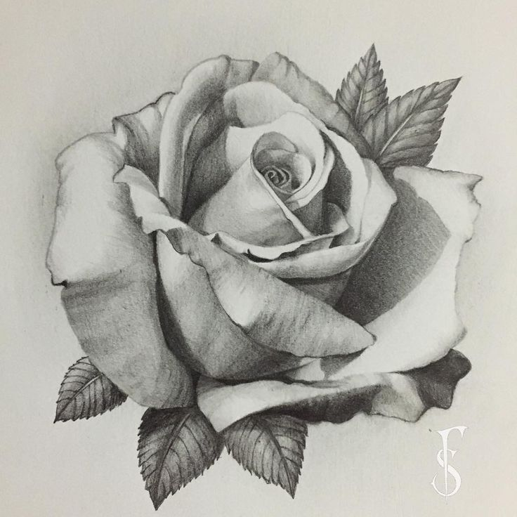 Everything finished with this rose, it's my favorite that I've drawn so far. #alles #bisher #this #favorite #ready