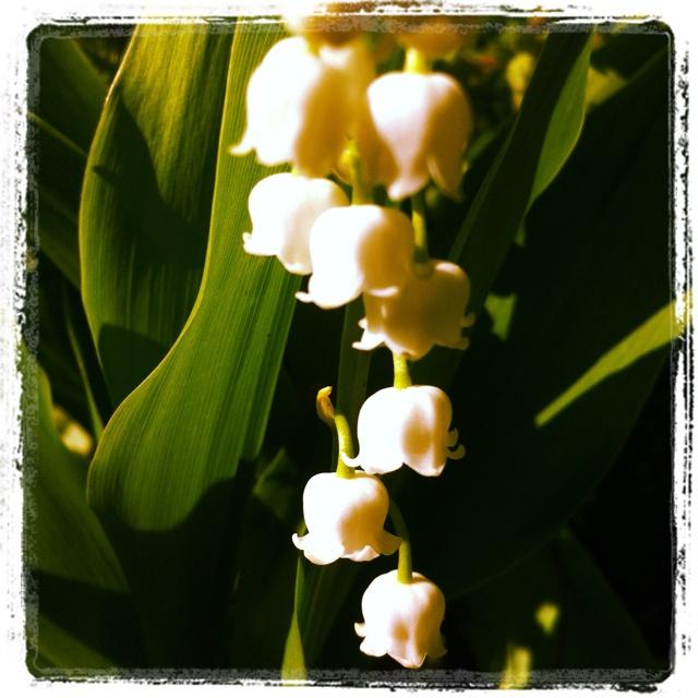 May Garden -- Day 11