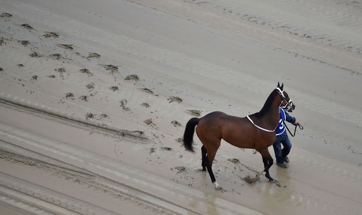 In a tragic start to Preakness day, the winner of the first race at Pimlico Race Course has died on his walk back to the barn.