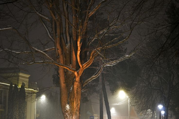 snow covered tree in street lights