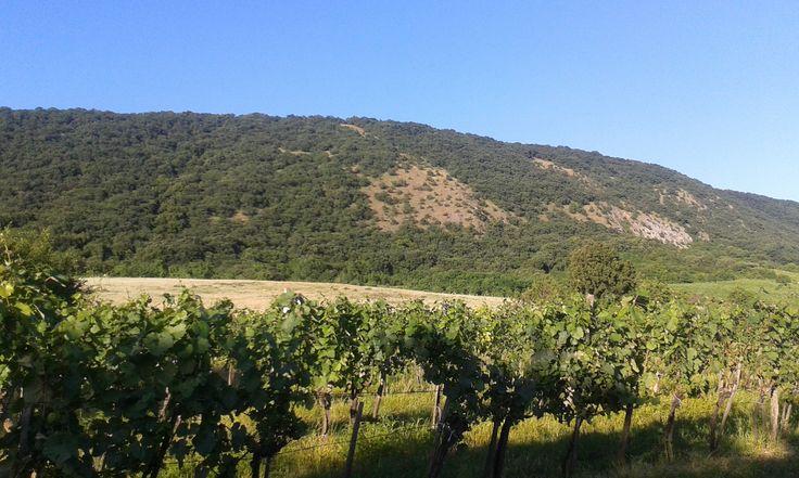 Móri Ezerjó Borút Mór-Csókakő szakasz Gyönyörű része a Móri Borvidéknek a Vértes alatt, itt van a szőlőterületeink nagy része is. http://www.geszlerpince.hu/fedezd-fel