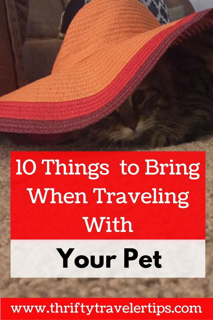 Planning a trip with your pet can be overwhelming. You need to keep your pet calm and comfortable on your trip. This post has tricks to keep your pet calm, things to bring when traveling with your pet, and our favorite travel gear for pets. Make sure you save this post for later and send it to your friends!