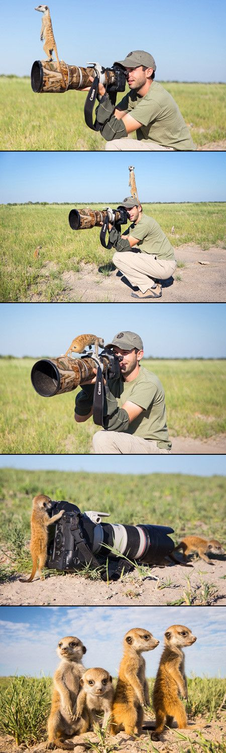 During a photo shoot in the Makgadikgadi region of Botswana, wildlife photographer Will Burrard-Lucas found himself situated between very curious meerkat babies who began exploring his camera equipment and very protective parents who decided that Will would do just fine as a makeshift lookout post.