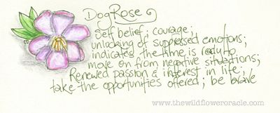 The Australian Dog Rose ~ Bauera rubioides These are the Signature Sketches from my daily journal that I create as I'm researching my new Oracle Decks and Books. I'm happy to share them with those who connect with my work