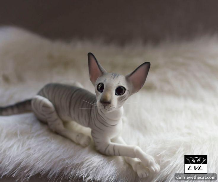 Extreme Oriental Male | by BJD Pets (dolls.evethecat.com)