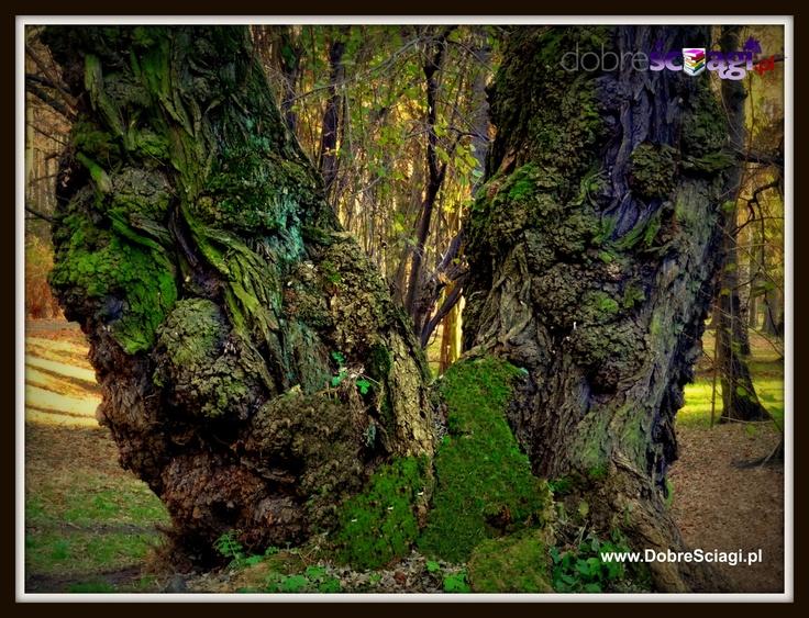 The Fairy Tree © by http://DobreSciagi.pl