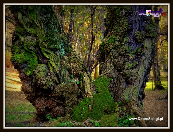 The Fairy Tree © by http://DobreSciagi.pl