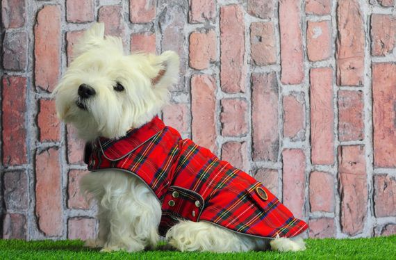 Two Red Plaid Dog Coats Christmas Dog Coats Westie Walk Jackets Dog Winter Jackets Tweed Dog Vest Tartan Westie Coat Red Coat Belt 2 Dog Coats Small Dog Coats Tartan Dog