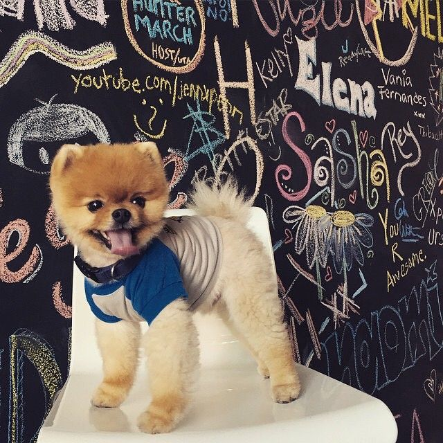 Best Jiffpom Images On Pinterest Carnival Adorable Puppies - Jiff the pomeranian is easily the best dressed model on instagram