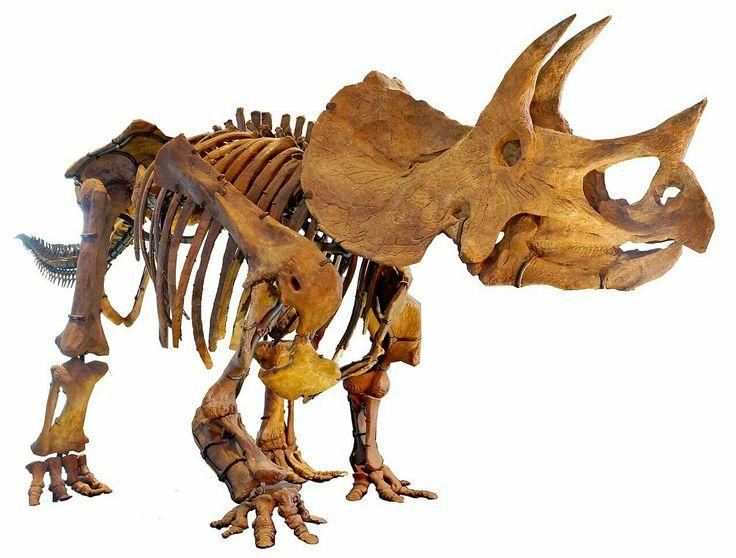 Marsupial dinosaur