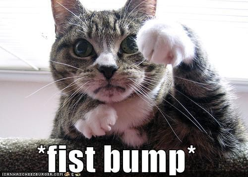 Funny fist bumps