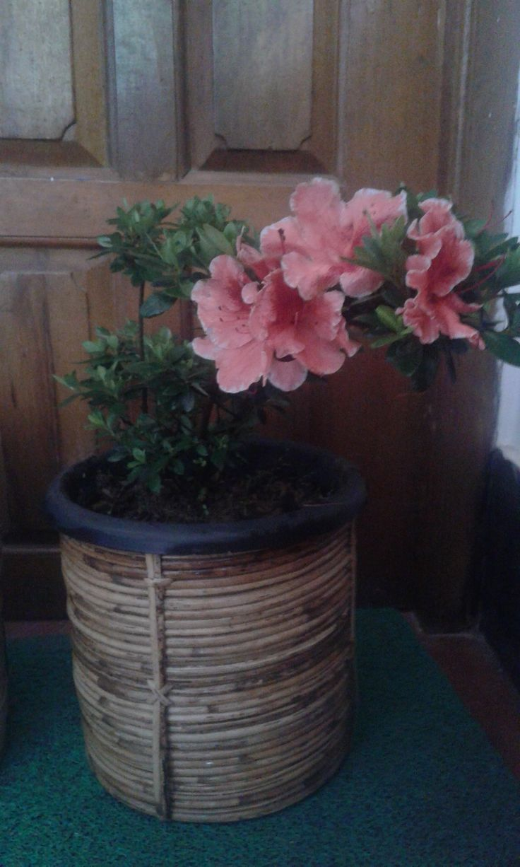 pretty pot for fronth porch